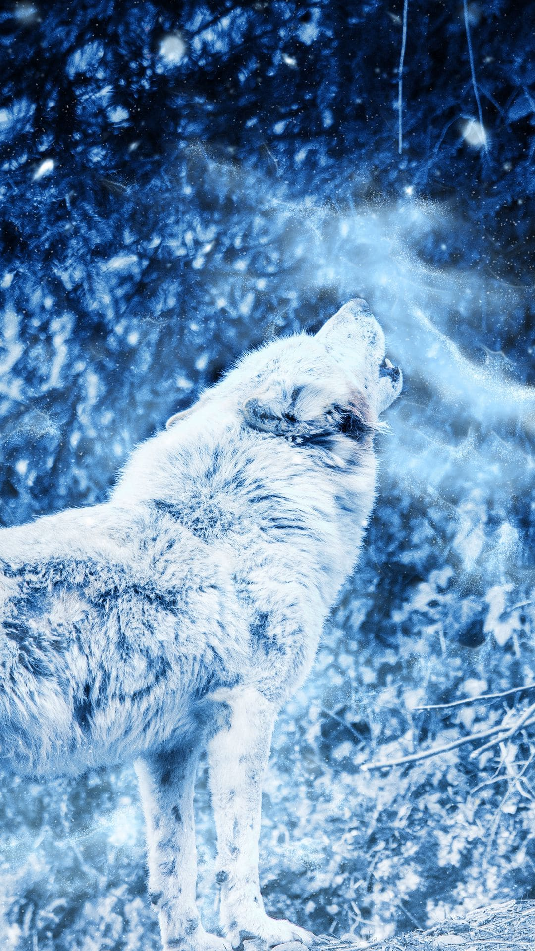 wolf android wallpaper